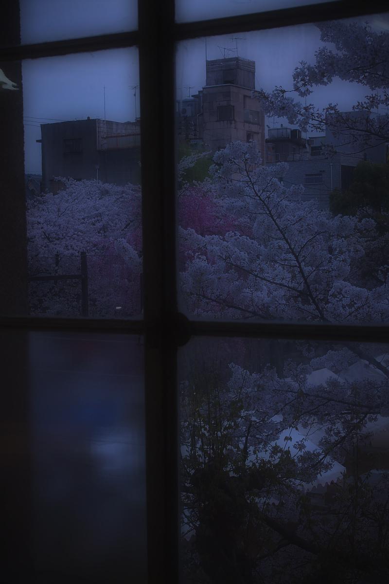 京都 立誠小学校と桜_f0021869_21483424.jpg