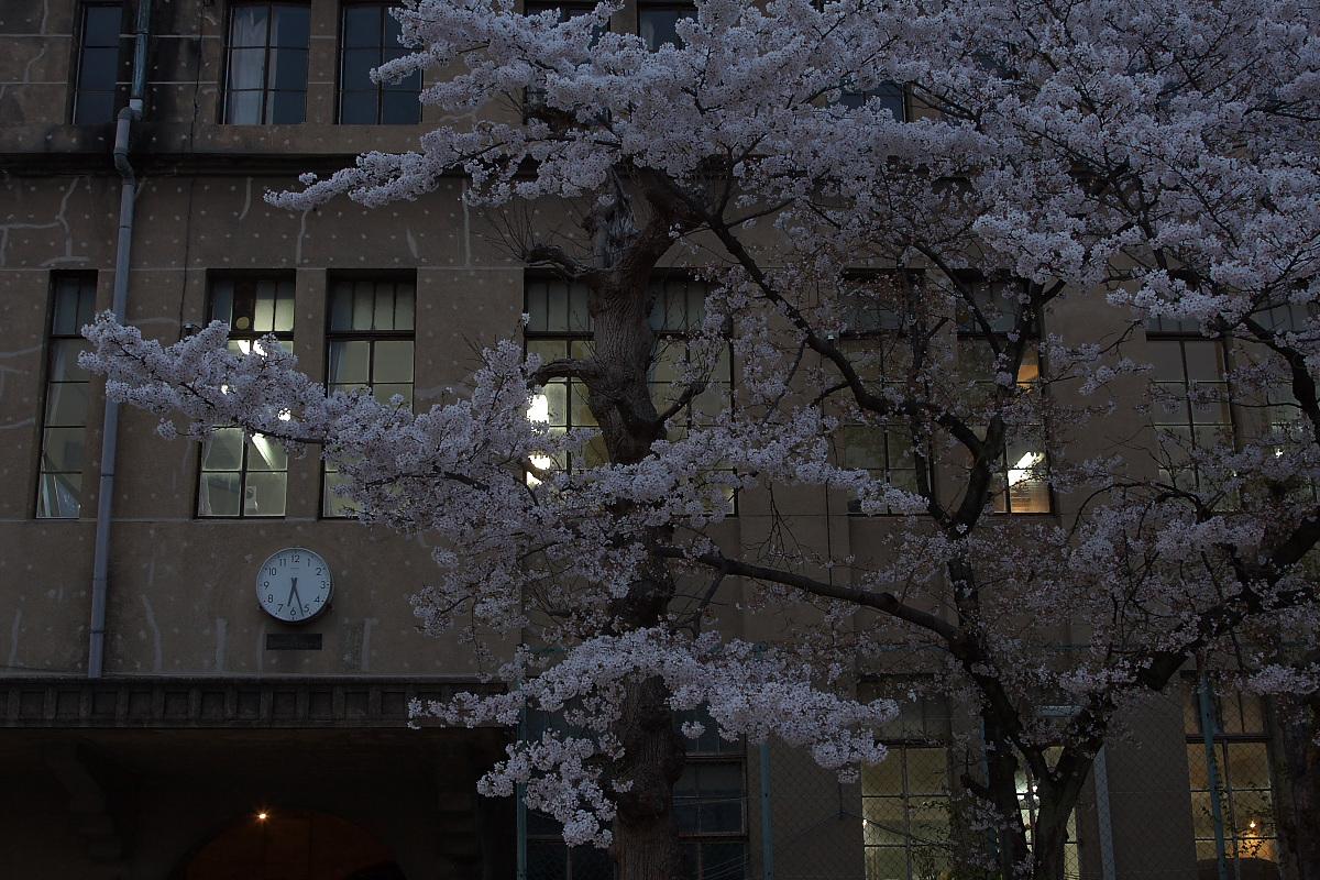 京都 立誠小学校と桜_f0021869_21502570.jpg
