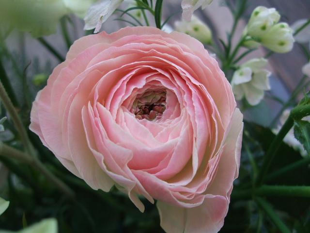 オークリーフ(バラ・緑光と桜色のアレンジメント)_f0049672_14585217.jpg