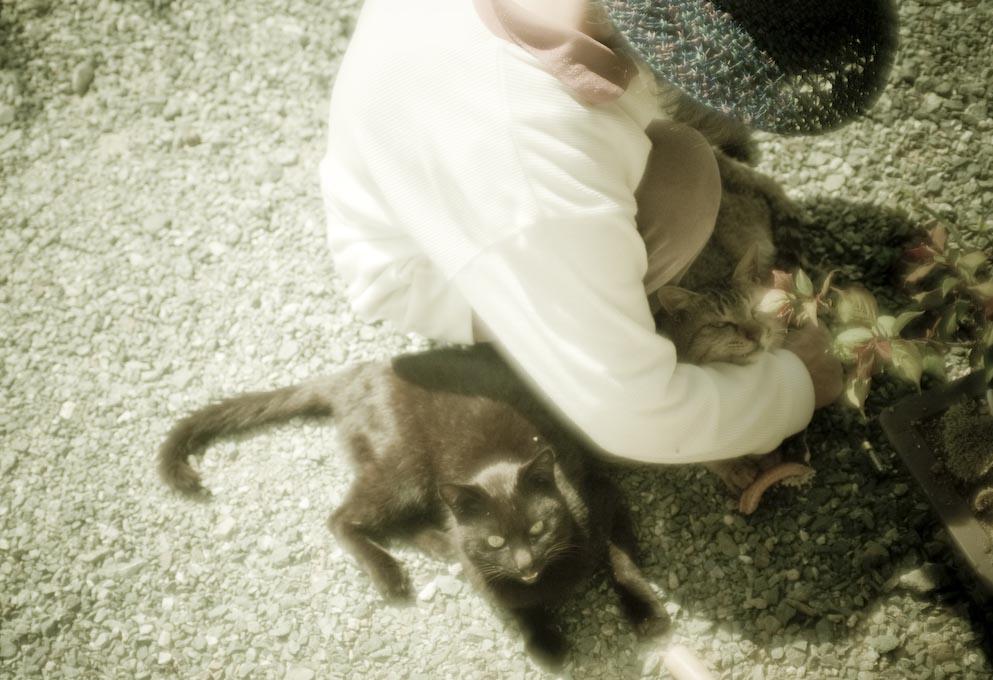 母と猫_c0150383_208454.jpg