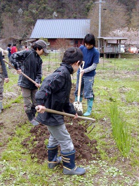 種芋植え_c0057390_042697.jpg