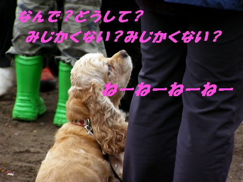 b0067012_015545.jpg