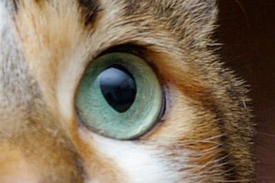 ミルクの眼。_a0028451_1237391.jpg