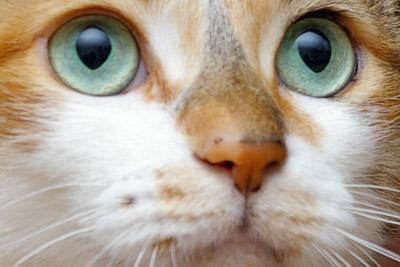 ミルクの眼。_a0028451_12374995.jpg