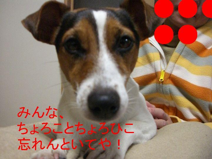 f0053952_2013044.jpg