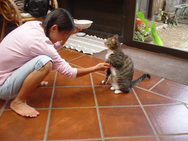 マウイの猫とアヒル_d0143957_226227.jpg