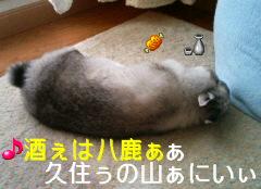 f0104057_1411057.jpg