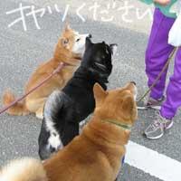 動物病院にてオシャベリ_b0057675_15312595.jpg