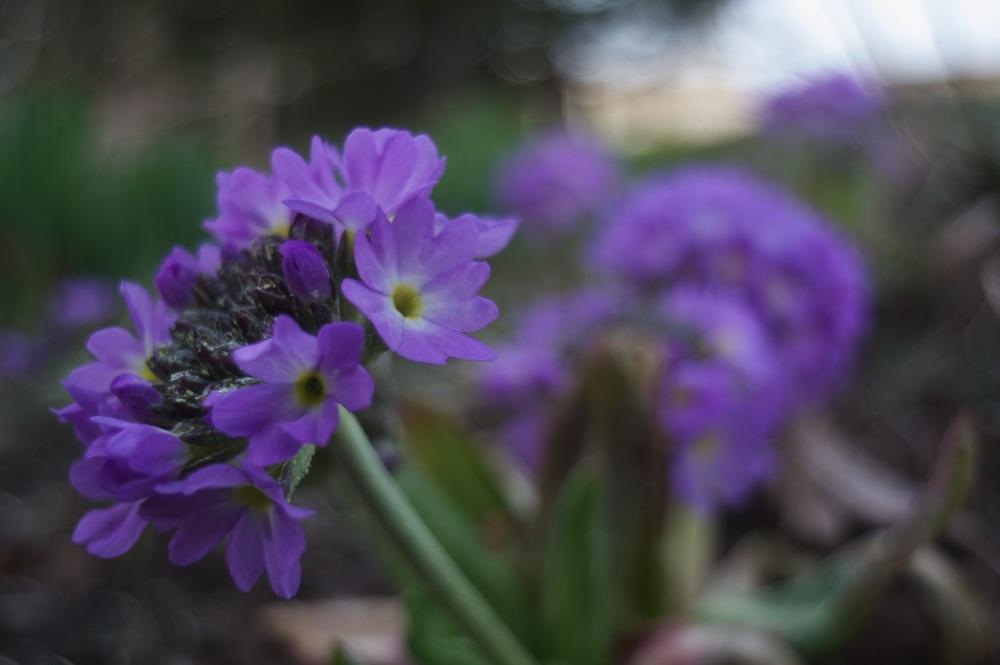庭の花_f0042194_027720.jpg
