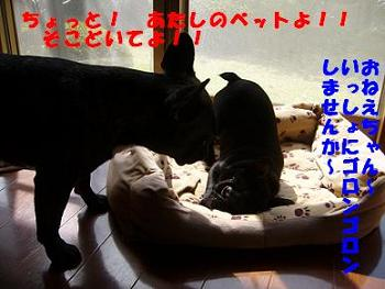 b0134197_14534933.jpg