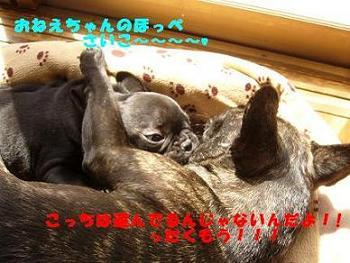 b0134197_1457821.jpg
