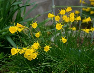 庭の花_c0081499_1034380.jpg