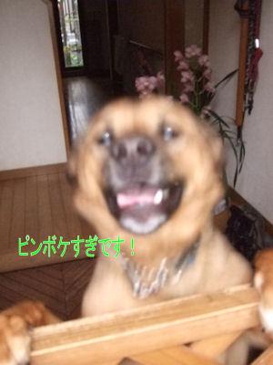 b0087400_0425090.jpg