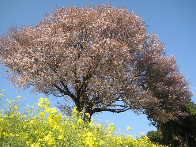 咲いてます。_f0040201_0393657.jpg