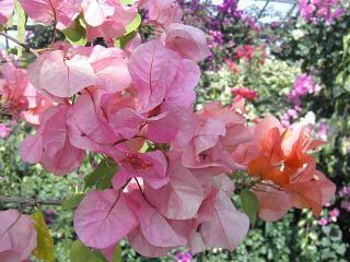 春の恒例行事_b0102217_2121357.jpg