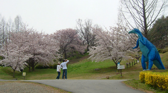 茶臼山公園の桜_d0066822_6571267.jpg