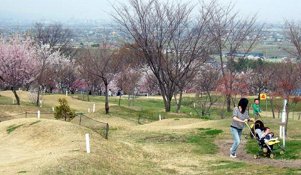 茶臼山公園の桜_d0066822_764296.jpg