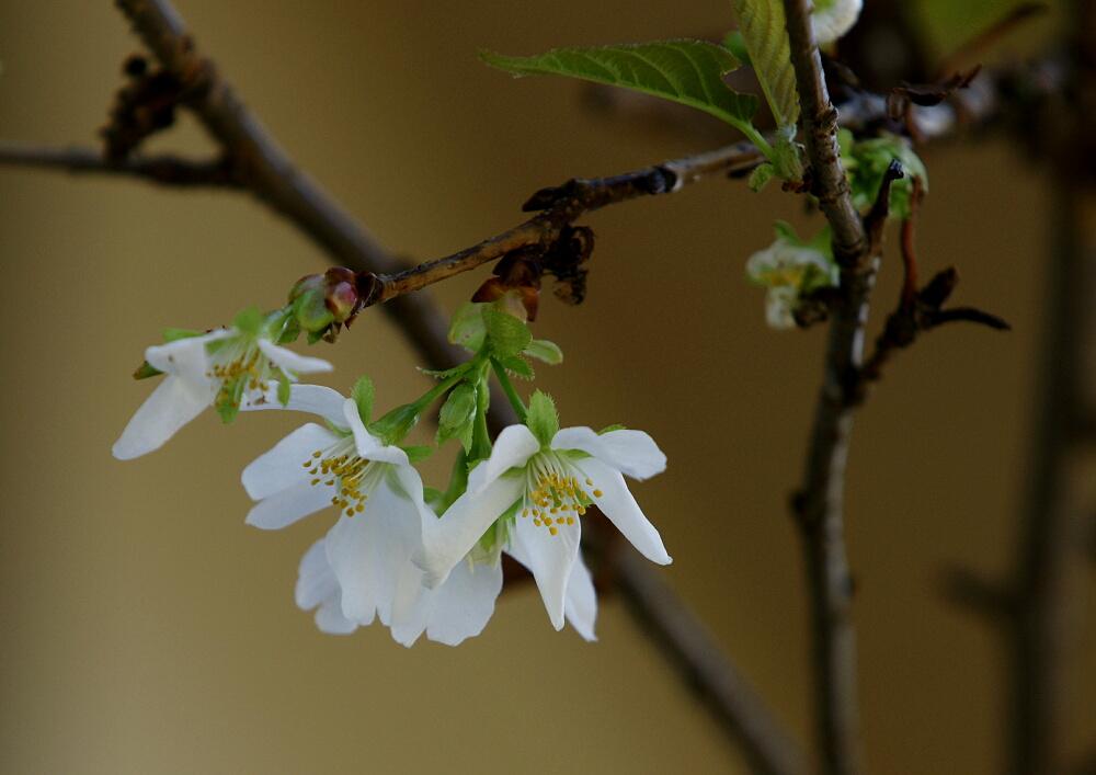 TWKの前・裏・そして上に咲く花たち_d0137627_1421678.jpg