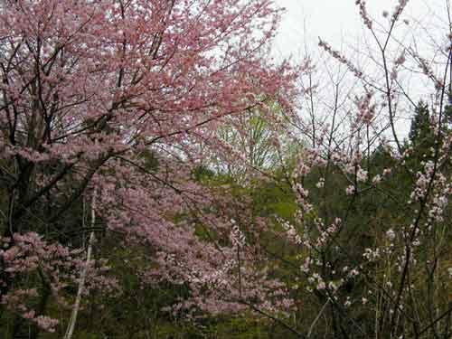 御食事処に新顔登場  庭の春_d0127634_19481537.jpg