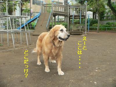 f0118135_20484221.jpg