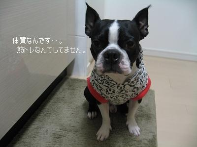 狂犬病の注射_e0126046_22252088.jpg