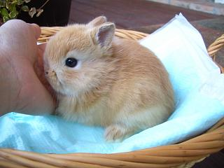 ネザー20年3月23日誕生オレンジ女の子_b0073753_2133138.jpg