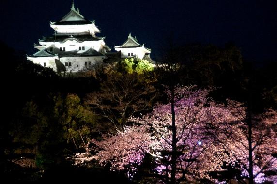 和歌山城  _b0093754_23551361.jpg