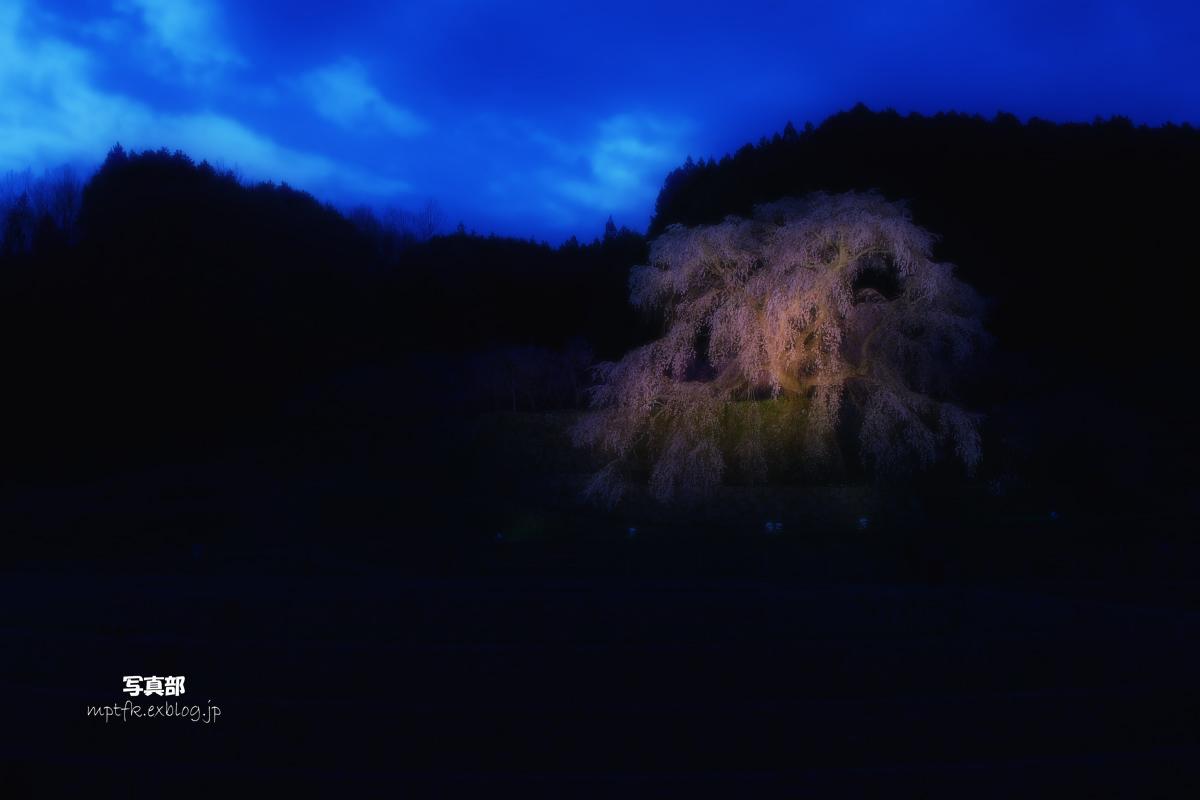 奈良 又兵衛桜 ライトアップ_f0021869_1922263.jpg