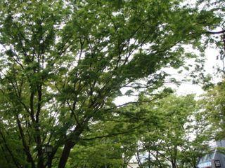 2008.4.17  新緑の季節_a0083571_1230116.jpg
