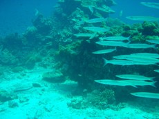 ピピ島でしょっぱ~い♪_f0144385_21421855.jpg