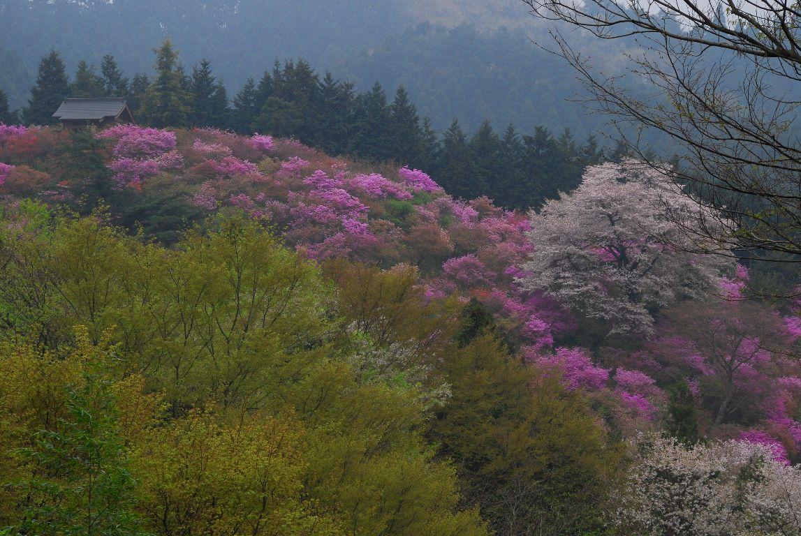 岩根山のツツジ_e0124594_20334270.jpg
