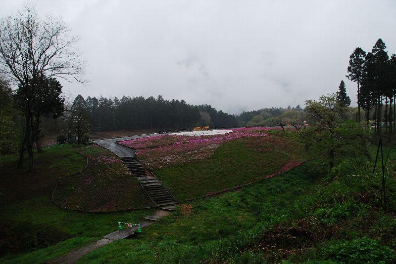 芝桜の丘(その2)_e0124594_21112561.jpg
