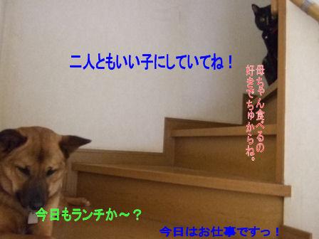 b0087400_027457.jpg