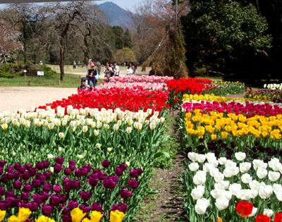 植物園 1、チューリップ_e0048413_10252071.jpg