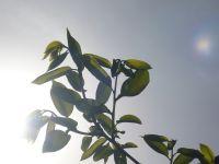 緑芽吹く_d0018315_23135017.jpg