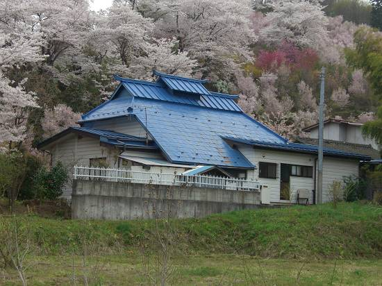 みちのく観桜行 (花見山)_d0065324_1054265.jpg