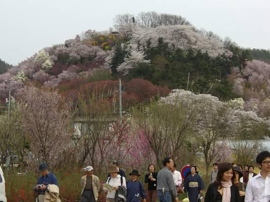 みちのく観桜行 (花見山)_d0065324_10545393.jpg