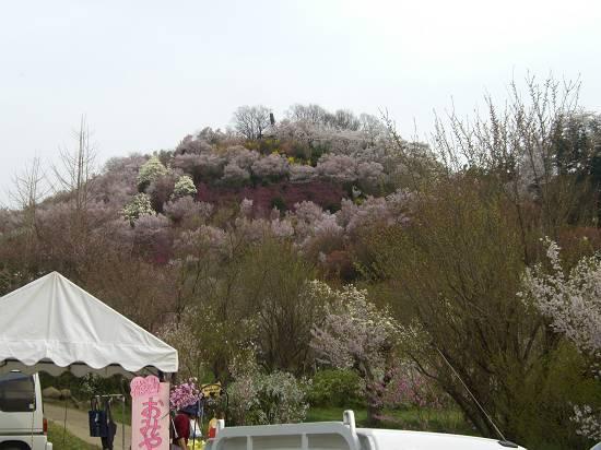 みちのく観桜行 (花見山)_d0065324_1153662.jpg
