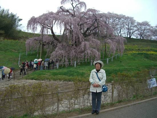 みちのく観桜行 掉尾 (三春の滝桜)_d0065324_18284065.jpg