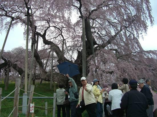 みちのく観桜行 掉尾 (三春の滝桜)_d0065324_18332686.jpg