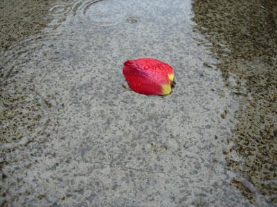 雨の日の過ごし方_e0097534_9242229.jpg