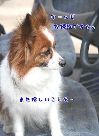 d0013149_8163817.jpg