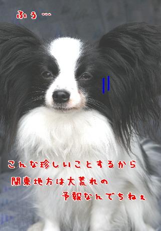 d0013149_8265646.jpg