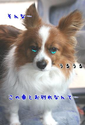 d0013149_8551432.jpg