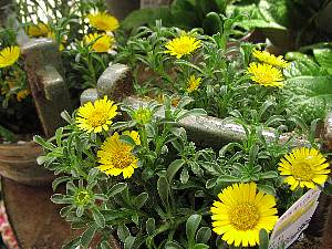 季節の鉢植え_c0141652_1423494.jpg