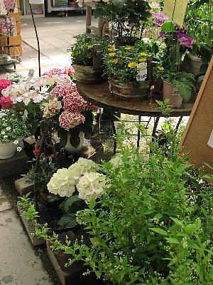 季節の鉢植え_c0141652_1425822.jpg