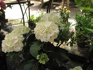 季節の鉢植え_c0141652_1431163.jpg
