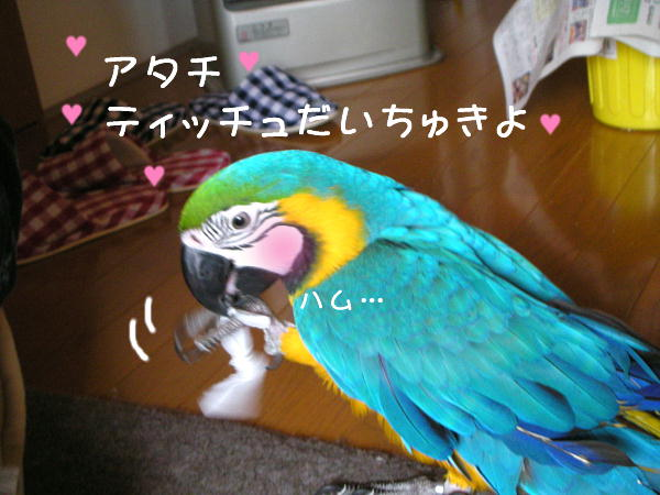 f0132055_9504550.jpg
