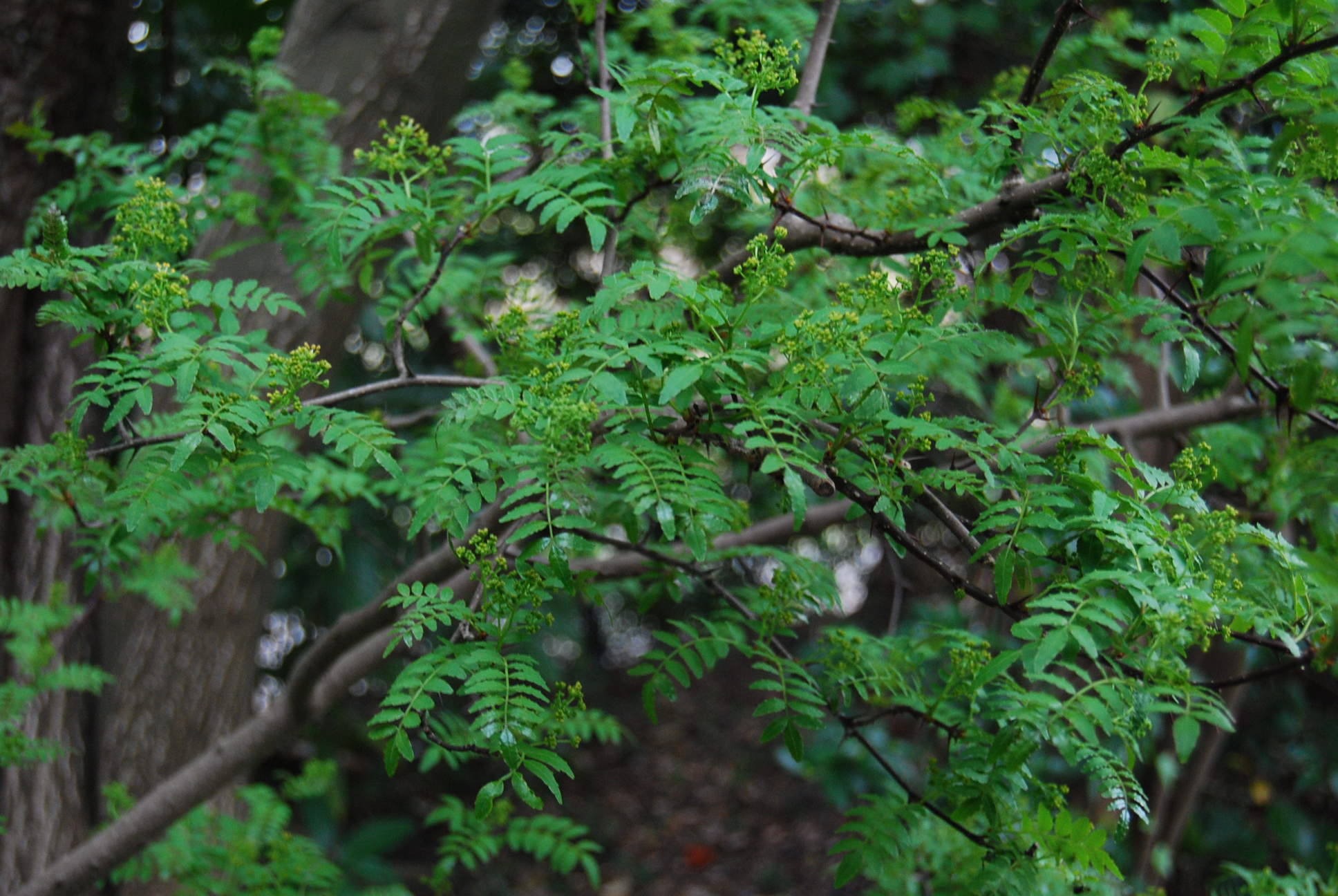 木の芽_e0142956_21275560.jpg