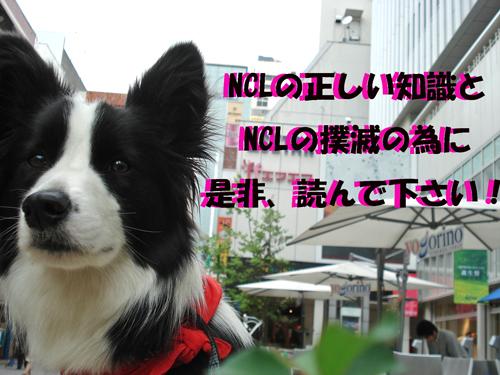 f0132070_26772.jpg